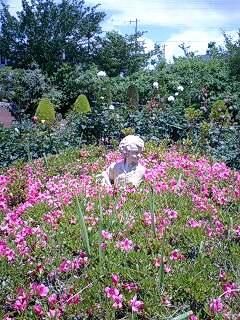 豊中緑丘:清谷池公園内 バラ園にて