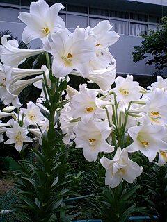 今日の一花