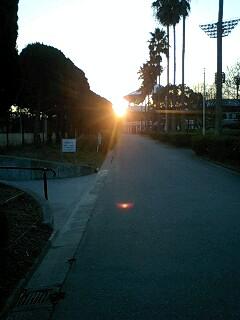 豊島公園ローズ球場から朝日を望む