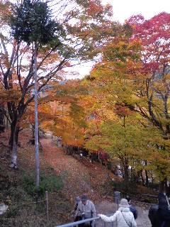 高雄山 紅葉三景