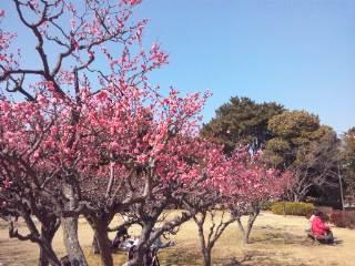 春来る 服部緑地円形花壇にて
