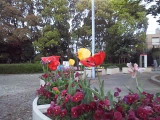 夜明け前の豊島公園