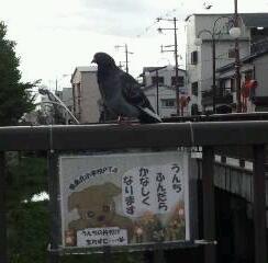 鳩が注意!?