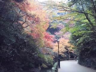 秋の箕面三景