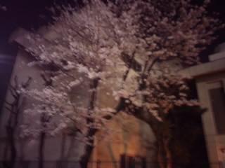 豊中一中裏門夜桜