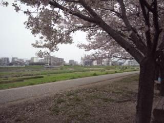 猪名川、さくら、イオンモール