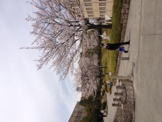 関学さくら道、さくらキャンパス